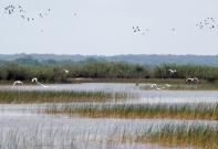 habitat-marsh